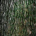 Ładny i {czysty zieleniec to nie lada wyzwanie, szczególnie jak jego konserwacją zajmujemy się sami.